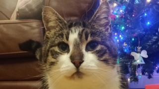 Spuds the unsociable cat saved his owner's family from a house fire